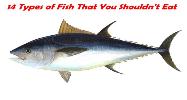 14 Types of Fish That You Shouldn't Eat